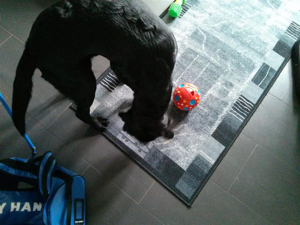 Bilde: Flex leker med ball