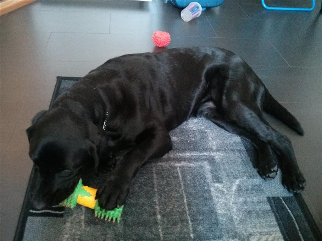 Flex leker med et gummibein